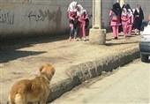سگهای ولگرد به معضلی برای شهروندان قشم تبدیل شدهاند
