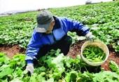 آموزشهای بخش کشاورزی یک پارچه شد/ جدول دوره های آموزشی استانها