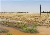 بیشترین خسارت حوادث غیرمترقبه به بخش کشاورزی استان زنجان وارد شده است