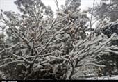 هواشناسی ایران  سردترین و گرمترین شهرهای ایران
