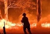 بارندگی از شدت آتشسوزی گسترده در استرالیا کاست/ 24 انسان و 500 میلیون حیوان در آتش سوختند