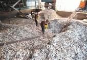 دلایل فوت 5 کارگر شرکت پودرماهی قشم در دست بررسی است/ نتایج قطعی سه ماه آینده اعلام میشود