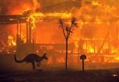 هفته نهم آتشسوزی گسترده در استرالیا / خسارات غیرقابل محاسبه
