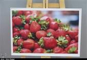 نمایشگاه «خردسالترین عکاس دنیا» در رشت به روایت تصویر