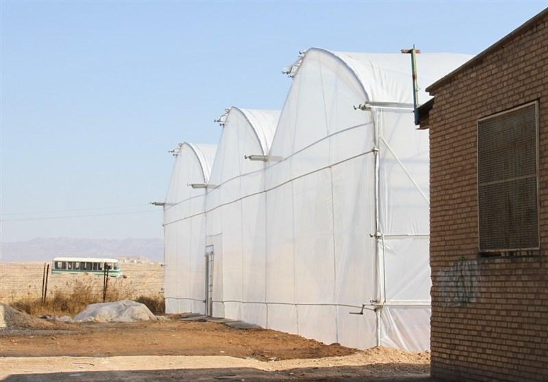 حمایت فائو از ایجاد معیشتهای جایگزین برای پناهندگان افغانستانی ساکن در ایران