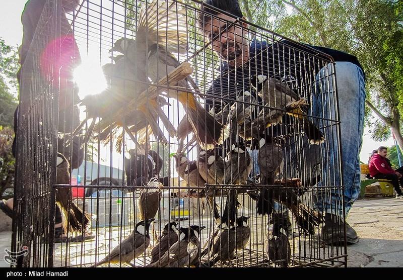 بازار پرندگان اهواز