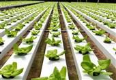 ضریب خودکفایی کشور در حوزه تولیدات کشاورزی به 82 درصد رسیده است؛ بهرهبرداری از 90 پروژه کشاورزی در دهه فجر