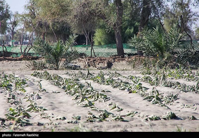 خسارت 80 میلیارد تومانی سیلابها به کشاورزی جنوب کرمان؛ بسیاری از چاههای کشاورزی تخریب شدند