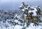 هشدارهای هواشناسی به کشاورزان تا 27 بهمن