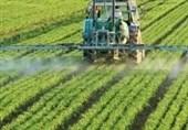 کشاورزان پیشرو 3 برابر دیگر کشاورزان تولید دارند/ نیازی به تراریخته ها نیست