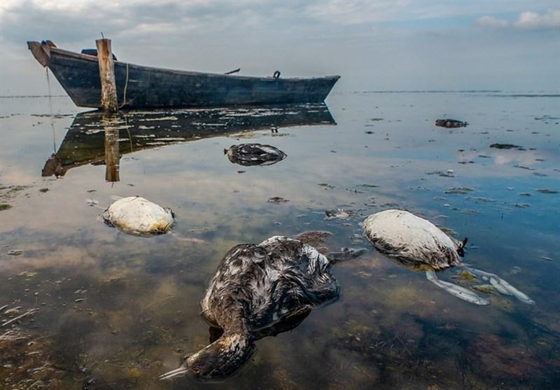 سایه شوم مرگ بر سر خلیج گرگان / تداوم مرگ و میر تلخ پرندگان مهاجر در تالاب میانکاله + تصاویر