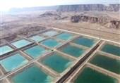 صنعت پرورش میگوی استان بوشهر نیاز به 5000تن سویا دارد