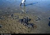 تداوم اتلاف پرندگان در میانکاله؛ اقامه دعوی محیط زیست علیه شکارچیان