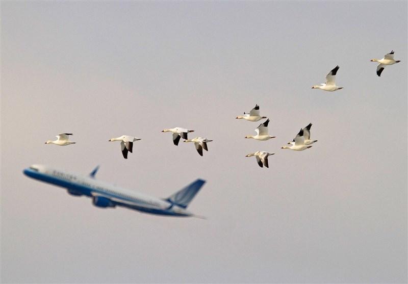 برنامه جامع مدیریت مخاطرات حیات وحش در فرودگاهها تصویب شد