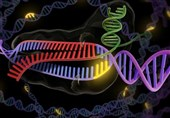 Gene Editing to Come to Help of Fighting Cancer