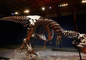 کشف بقایای 80 میلیون ساله گونهای از تیراناسورها در کانادا +تصاویر
