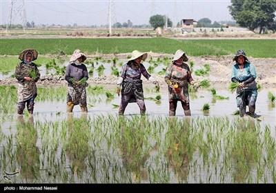 حضور زنان در عرصه کشاورزی