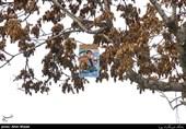 گزارش میدانی تسنیم از حال و هوای انتخابات در اصفهان؛ تبلیغاتی که بار درختان را سنگینتر کرد!