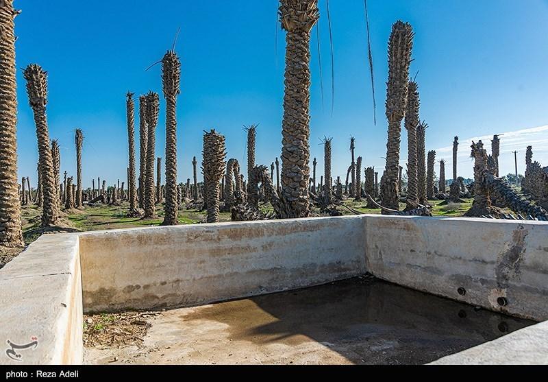 گزارش میدانی تسنیم از وضعیت مردم روستاهای سوسنگرد؛ رهاسازی آب در پاییندست شاخه کرخه+ فیلم