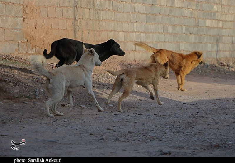 چرا شهرداری اردستان نسبت به جمع آوری سگ های ولگرد اقدام نمیکند?