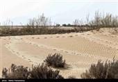 584 هکتار گززار طبیعی در حوضه دریاچه ارومیه پرورش یافت