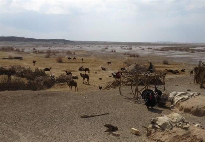 جنگل «نخاب» خوسف به لیست مناطق بحرانی استان خراسان جنوبی افزوده شد