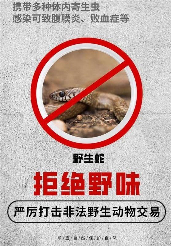 مصوبه جدید مجلس چین درباره ممنوعیت خوردن حیوانات وحشی