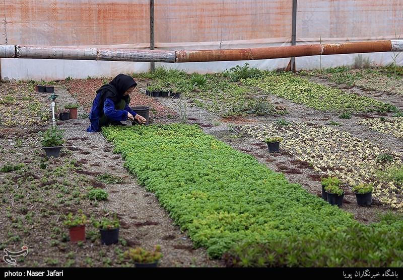 مددجوی توانمند شده کمیته امداد / پرورش گل و گیاه