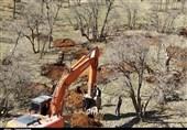طرح صنوبرکاری و جهش تولید چوب در استان قزوین اجرا میشود
