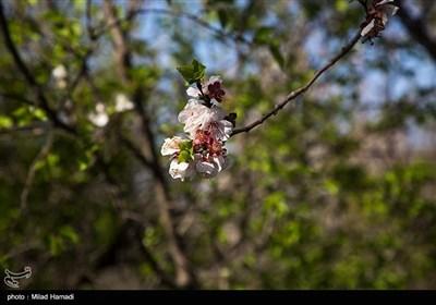 الربيع في بهبهان بمحافظة خوزستان