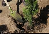 کاشت درختان سوزنی برگ تاثیر کمی بر کاهش آلودگی هوای تبریز دارد