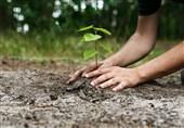 کاشت 2 هزار درخت در جزیره قشم/ حفظ و گسترش منابع طبیعی وظیفه دینی و عقلی است+فیلم