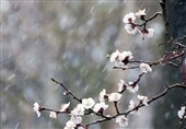 یخبندان شبانه در خراسان جنوبی/کشاورزان تمهیدات لازم را برای پیشگیری از سرمازدگی محصولات خود به کار ببرند