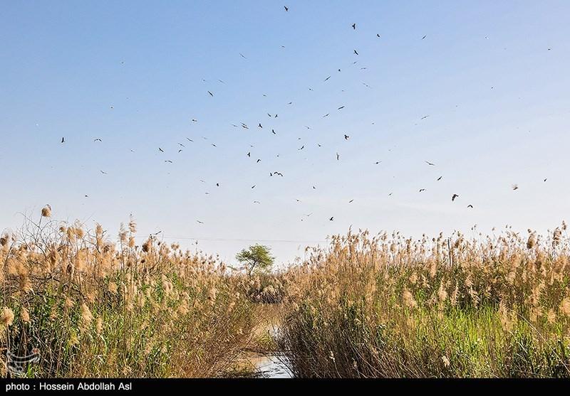 FAO FundsProgramme to Strengthen Iran's Capacity to Control Desert Locust