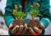 احداث باغچه های محلی با مشارکت ساکنان محلات تهران