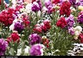 خراسانشمالی|بارش برف بهاری در ارتفاعات اسفراین؛ باغداران مراقب سرمازدگی درختان باشند