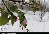 خودنمایی برف زمستانی در بهار پلدختر بهروایت تصاویر