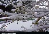 لرستان| بارش برف بهاری در الیگودرز به روایت تصویر