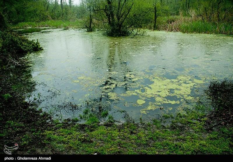 Qadikola Lagoon in Iran's Mazandaran - Tourism news
