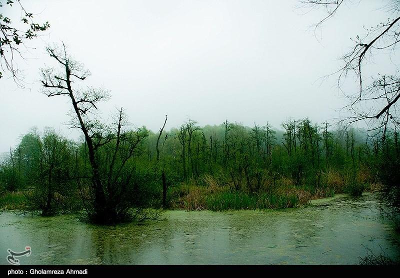Qadikola Lagoon in Iran's Mazandaran