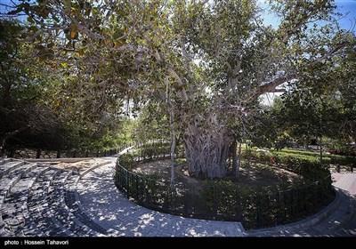 درخت سبز و آب انبارو مجموعه فرهنگی گردشگری میراث کیش