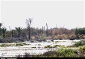 گزارش ویدئویی  روایت تسنیم از مناطق آب گرفته میناب / خانههای روستاییان پر از گل و لای شد / باز هم جهادگران به کمک مردم شتافتند
