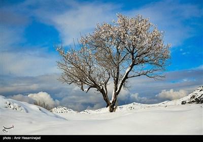 بهار برفی در روستاهای اطراف قم
