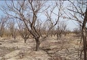 خشکسالیهای 18 ساله همچنان دامنگیر خراسان جنوبی است