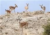 ورود به مناطق تحت حفاظت محیط زیست خراسان جنوبی ممنوع شد