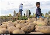 گزارش|تلخیکام کشاورزان اردبیلی تمامی ندارد / کشاورزان دل خوشی از دولتیها ندارند