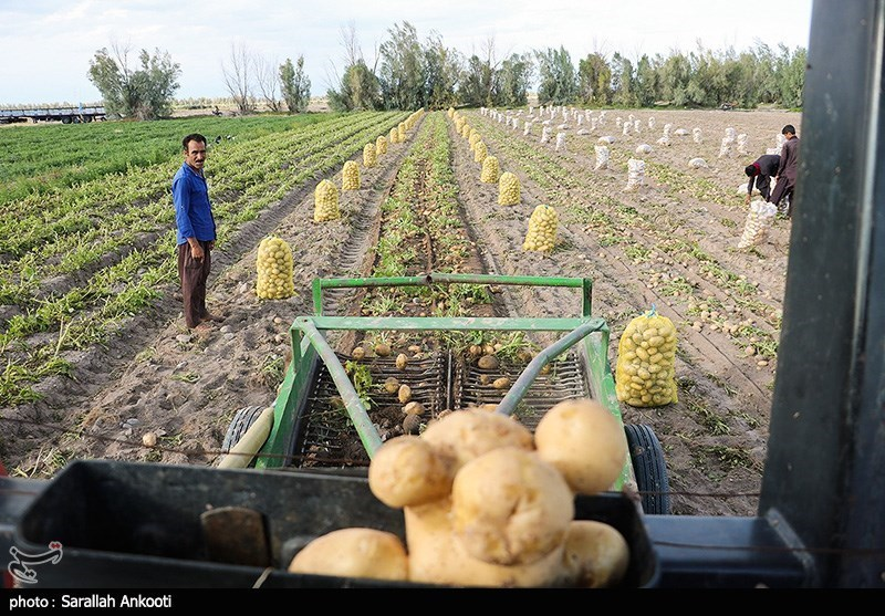 سیل زده , استان کرمان , کشاورزی ,
