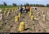 تفاوت قیمت فاحش محصولات کشاورزی در کرمان؛ سودهای غیرمتعارف به جیب چهکسانی میرود؟