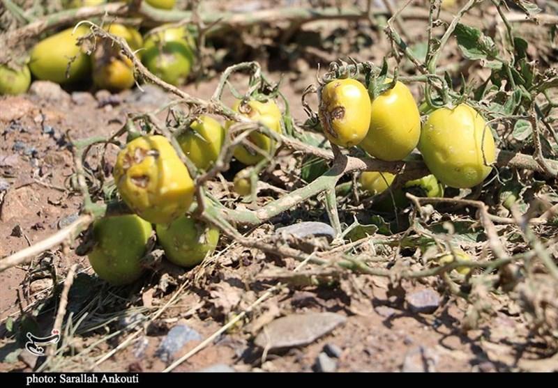 بیش از 7 میلیارد ریال به کشاورزان خراسان شمالی غرامت پرداخت شد