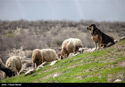 طبیعت بهاری کرمانشاه